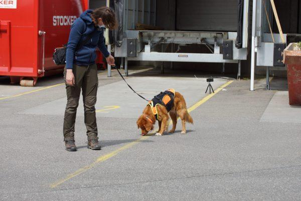 Line Up Fischotterkot mit Spürhund Django